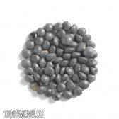 Чорна сочевиця. властивості і користь чорної сочевиці