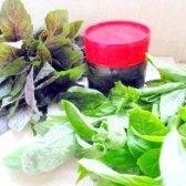 Як приготувати пряні трави в олії на зиму - рецепт