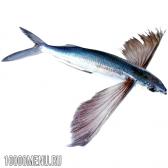 Летюча риба