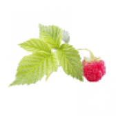 Листя малини. властивості листя малини