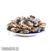 Молюски - види і склад. властивості і шкода молюсків