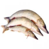 Риба щука - склад і властивості. калорійність і користь щуки