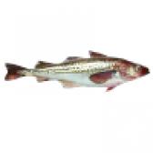 Риба минтай - калорійність і склад. користь і шкода минтая
