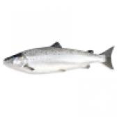 Риба сайда - види і калорійність. користь і шкода риби сайда