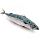 Риба скумбрія - калорійність і властивості. користь і шкода скумбрії