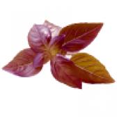 Базилік червоний і його склад