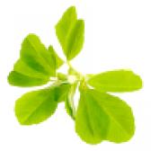 Пажитник сінної (фенугрек). властивості і користь пажитника