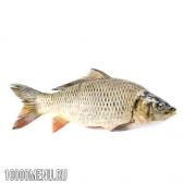 Риба сазан - калорійність і властивості. користь сазана