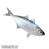 Риба жовтий полосатик. калорійність і шкода жовтого полосатика