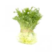 Салат фризі