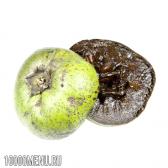 Сапоте (чорне яблуко)